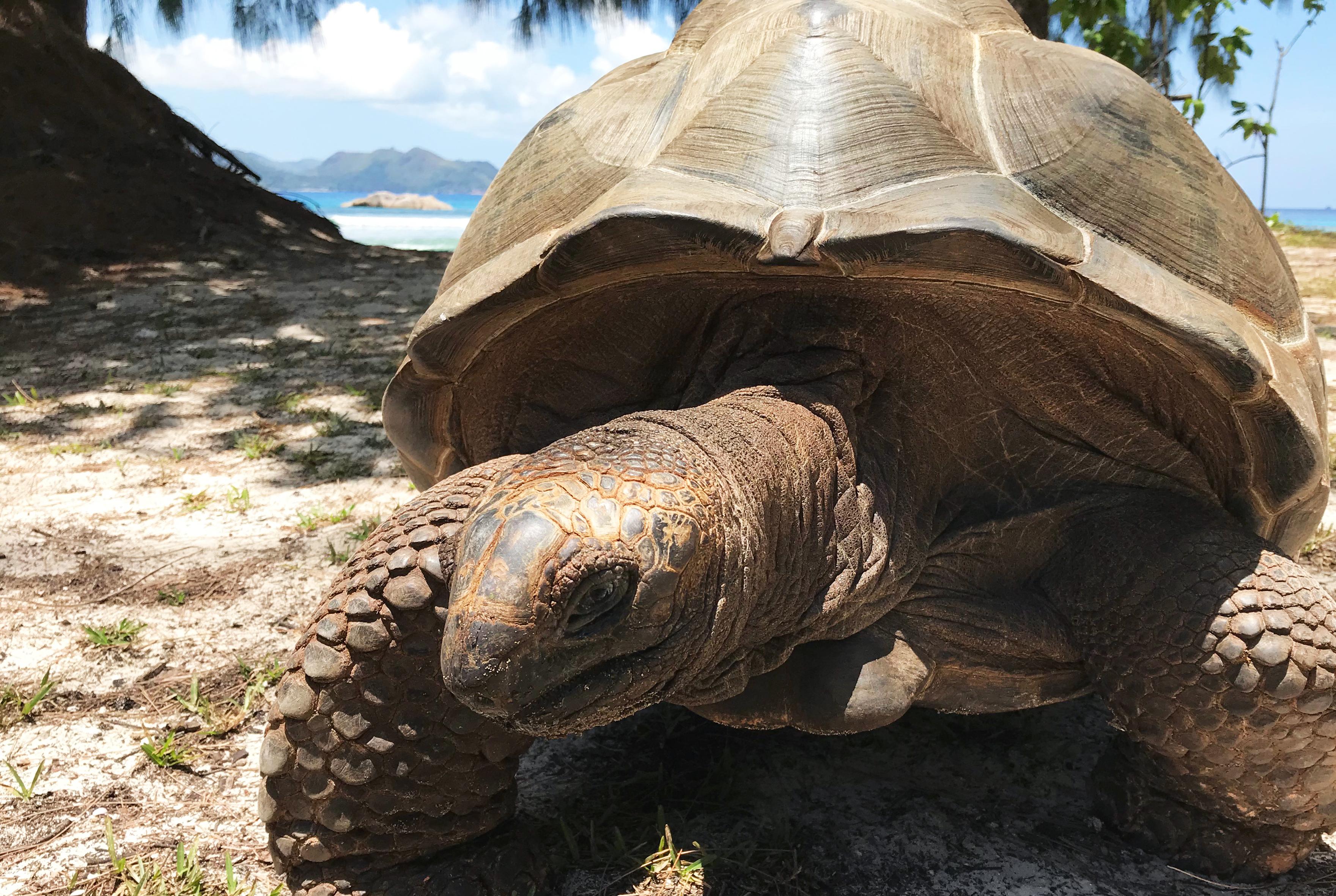 Лучший пляж в мире, черепахи и кокосовый ром: зачем лететь на Сейшелы Лучший пляж в мире, черепахи и кокосовый ром. Зачем лететь на Сейшелы? img 1304