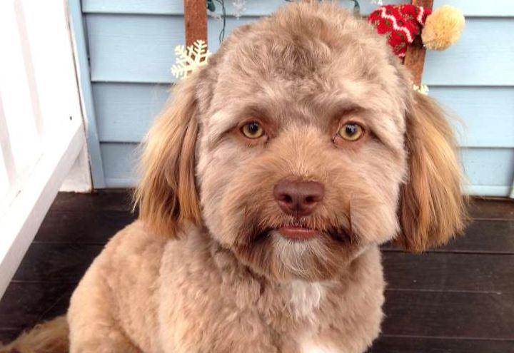 Об этой собаке с человеческим лицом говорит весь мир